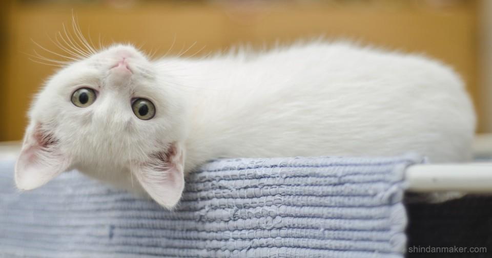 🐈猫伸ばしチャレンジ🐈